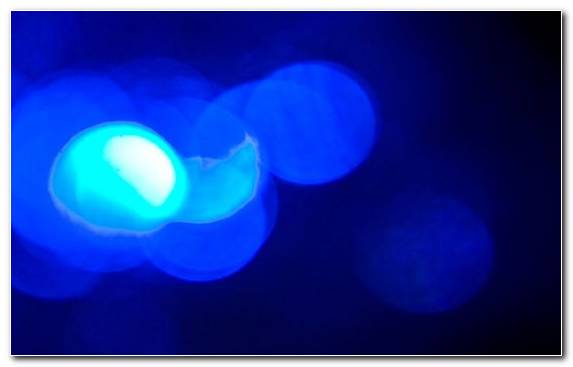 Image Blue Cnidaria Light Macro Photography Azure