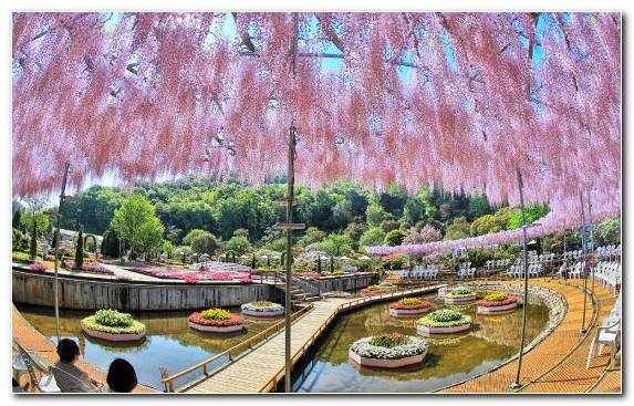 Image Botanical Garden Tokyo Waterway Tree Woody Plant