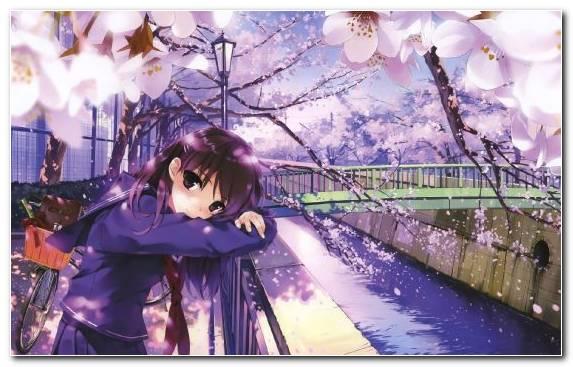 Image Branch Illustrator Spring Blossom Mei Misaki