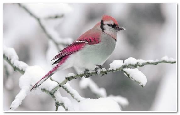 Image Branch Twig Snow Fauna Passerine