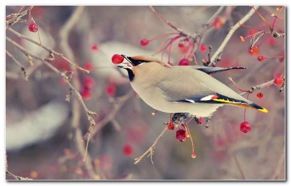 Image branch twig spring bird feather