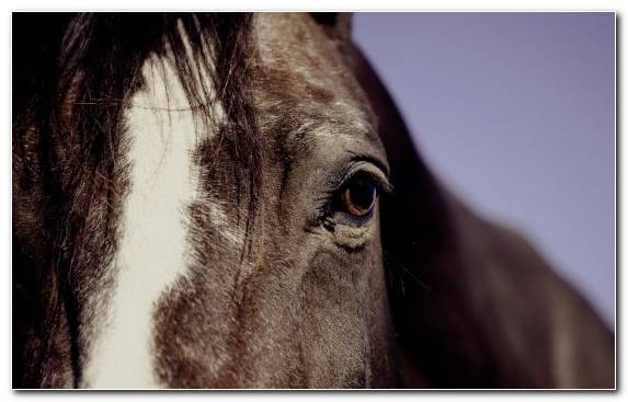 Image Bridle Equestrian Snout Eye Horse
