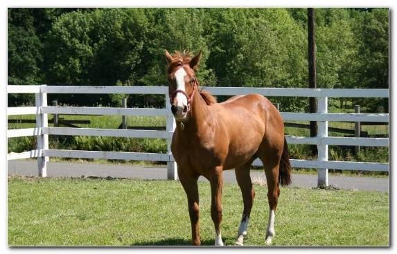 Image Bridle Horse Horses Grazing Colt