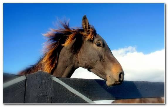 Image Bridle Horse Stallion Mane Horses