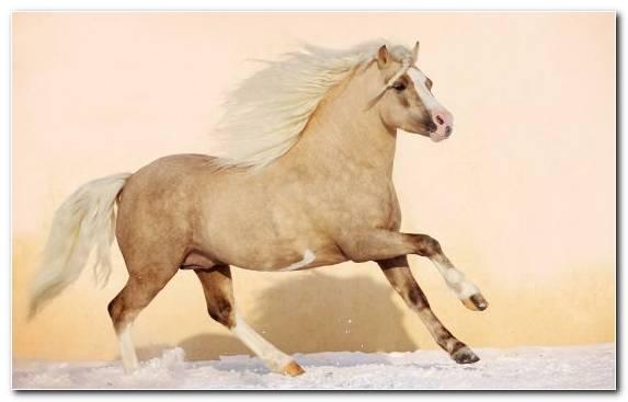 Image Bridle Mare Horse Mane Pony