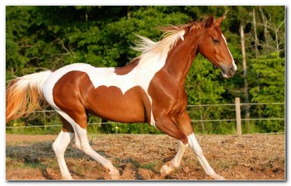Image Bridle Mare Sorrel Animal Mustang Horse