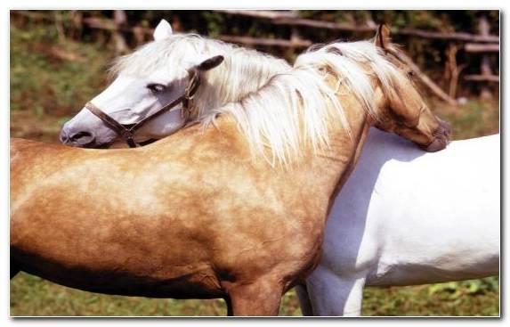 Image Bridle Rein Horses Halter Horse