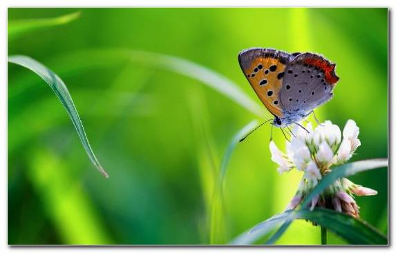 Image Brush Footed Butterfly Flower Bouquet Insect Pollinator Lepidoptera