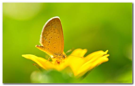 Image Brush Footed Butterfly Insect Close Up Moths And Butterflies Nectar