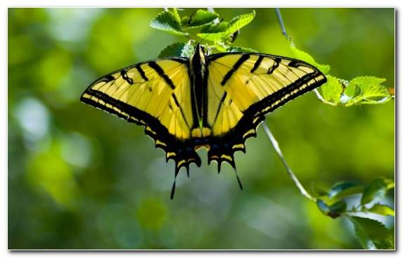 Image Brush Footed Butterfly Insect Moths And Butterflies Swallowtail Butterfly Moth