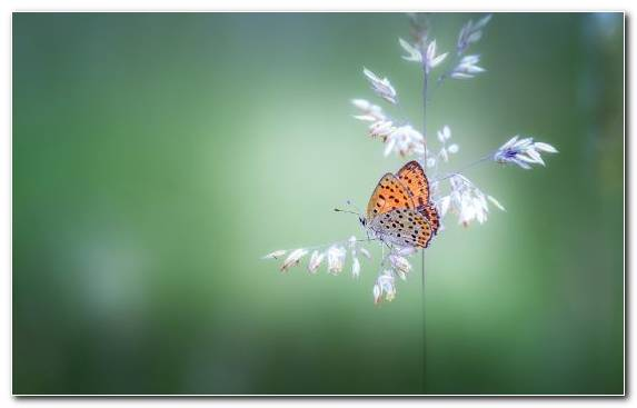 Image brush footed butterfly invertebrate flower nectar close up