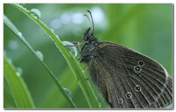 Image Brush Footed Butterfly Invertebrate Pollinator Wildlife Pieridae