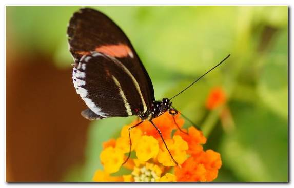 Image Brush Footed Butterfly Lycaenid Invertebrate Pieridae Insect