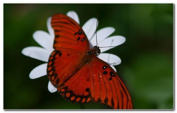 Image Brush Footed Butterfly Moths And Butterflies Insect Pieridae Invertebrate