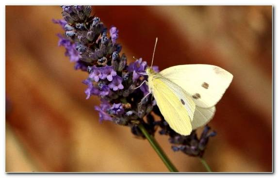 Image brush footed butterfly nectar pollinator moths and butterflies butterfly