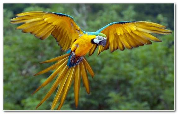 Image Budgerigar Parakeet Wildlife Parrot Bird