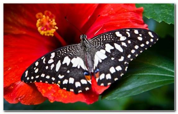 Image Butterfly Flower Brush Footed Butterfly Invertebrate Nectar