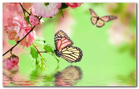 Image Butterfly Gardening Brush Footed Butterfly Pollinator Color Blossom