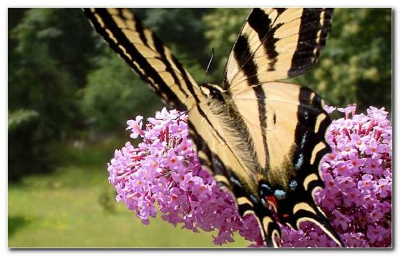 Image Butterfly Insect Operating System Windows 7 Flower