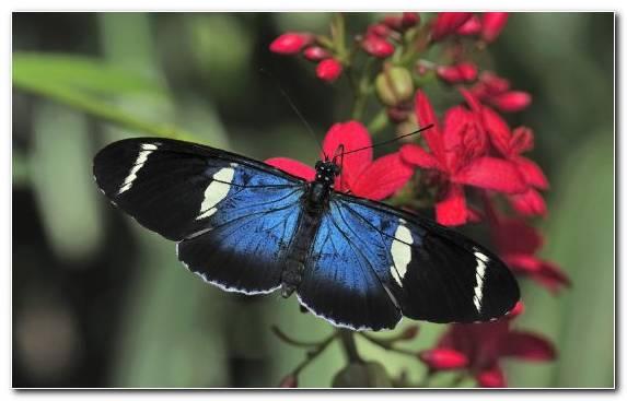 Image Butterfly Invertebrate Flower Sky Blue Pollinator