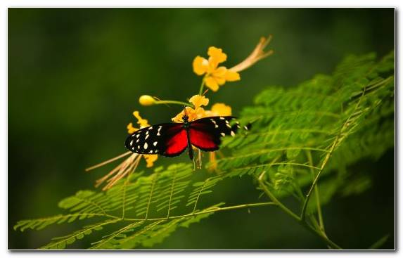 Image Butterfly Invertebrate Insect Flora Pollinator