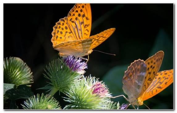 Image Butterfly Love Pollinator Invertebrate Nectar