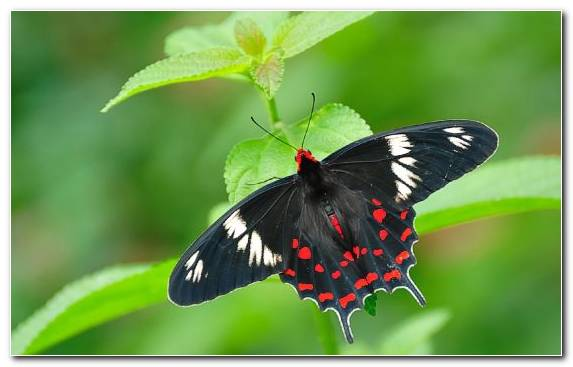 Image Butterfly Moth Brush Footed Butterfly Invertebrate Pollinator