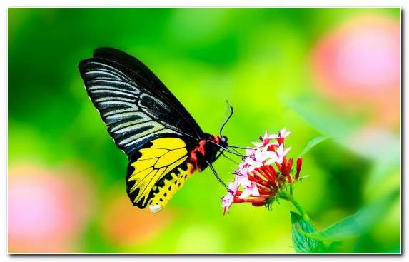 Image butterfly moths and butterflies insect LCD television invertebrate