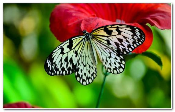 Image Butterfly Petal Invertebrate Butterfly Gardening Insect
