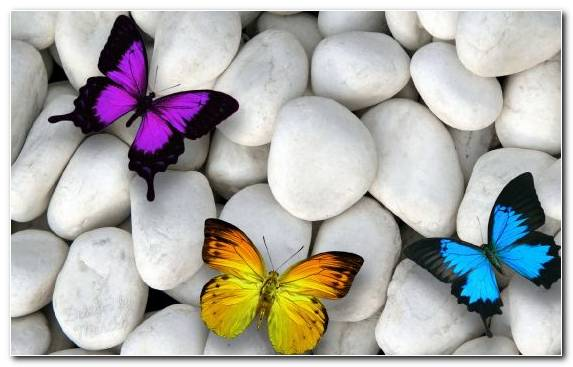 Image Butterfly Petal Moths And Butterflies Invertebrate Flower