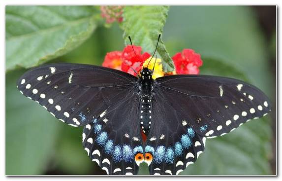Image butterfly pollinator insect moths and butterflies brush footed butterfly
