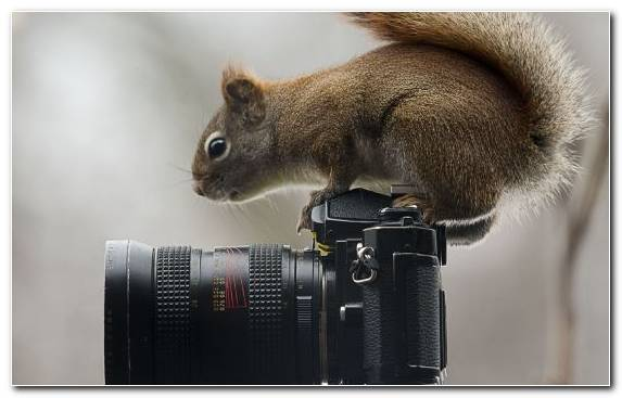 Image Camera Chipmunk Animal Photographer Squirrel