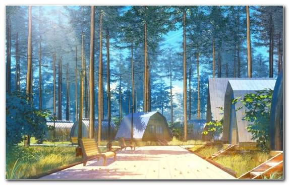 Image Camping Biome Property Forest Woodland