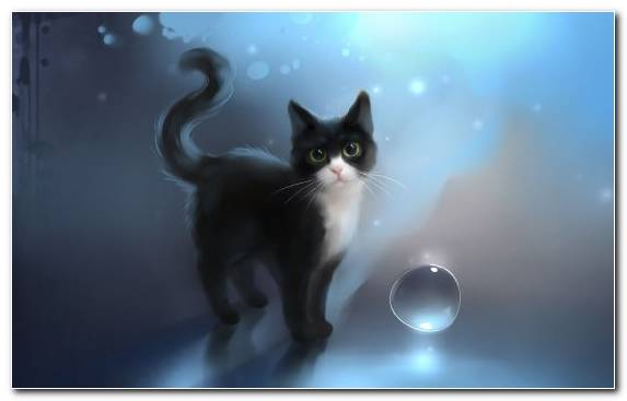 Image Cat Black Cat Moustache Sky Chibi