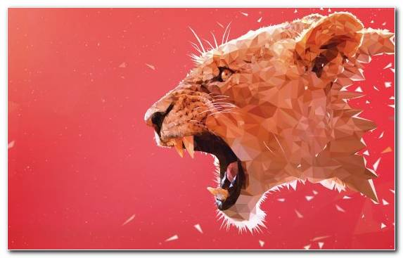 Image Cat Carnivora Roar Close Up Lion