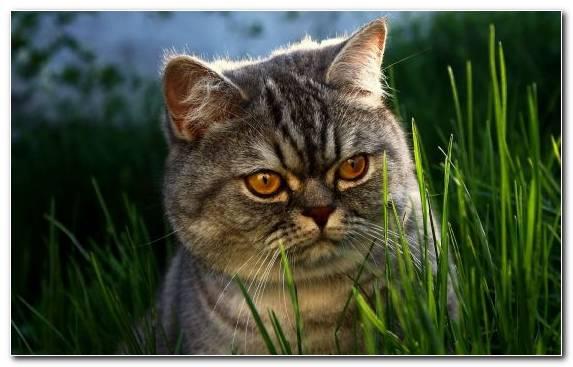 Image Cat Fauna Grumpy Cat Snout Mammal