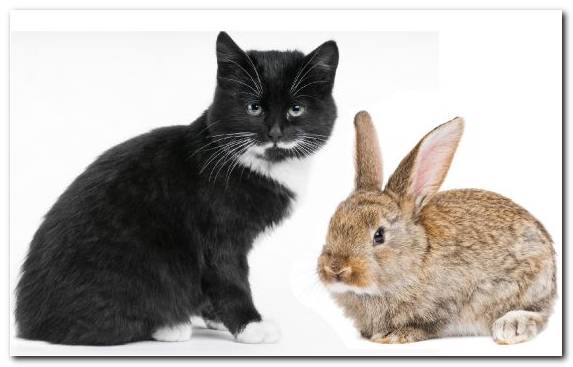 Image Cat Moustache Hare Rabits And Hares Whiskers