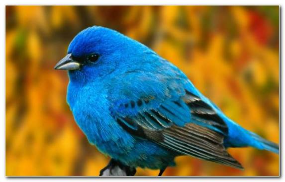 Image Cat Pet Bird Reptile Cobalt Blue