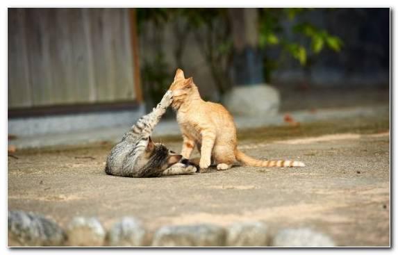 Image Cat Small To Medium Sized Cats Meow Wildcat Felidae