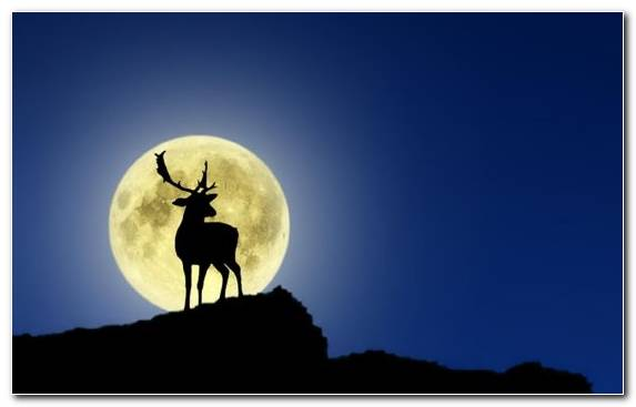 Image celestial event twilight deer moon astronomical object