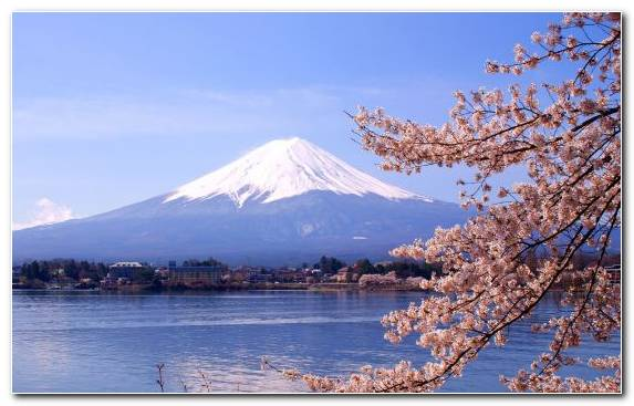 Image cherry blossom mount scenery snow japan mountain