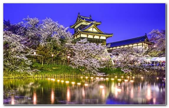 Image Cherry Blossom Sky Landmark Castle Plant