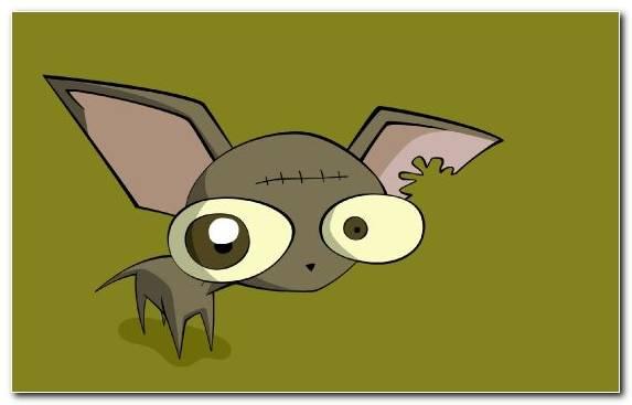 Image Chihuahua Tail Bat Vertebrate Mammal