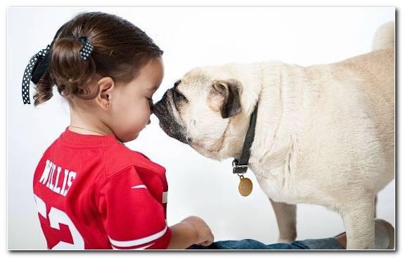 Image child ear dog like mammal breed puppy