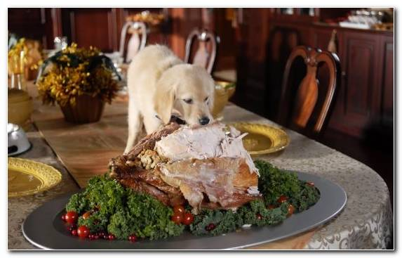 Image Christmas Stuffing Turkey Meat Caucasian Cuisine Puppy