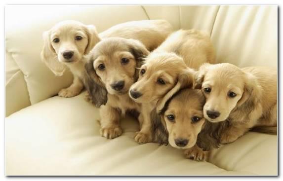 Image Clip Art Creative Arts Pet Dog Breed Dog