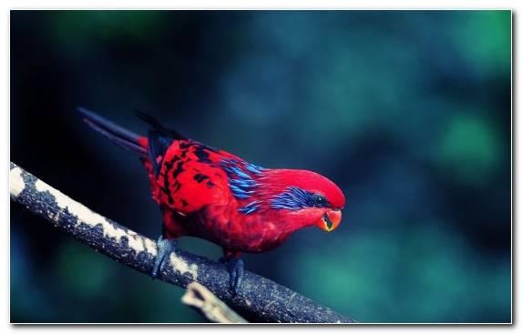Image Close Up Bird Lovebird Wildlife Beak