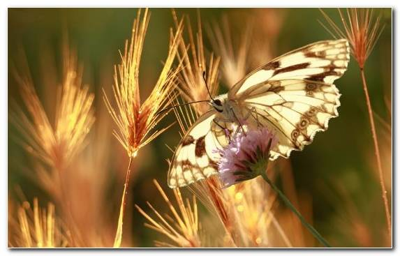 Image Close Up Moths And Butterflies Summer Butterfly Pollinator