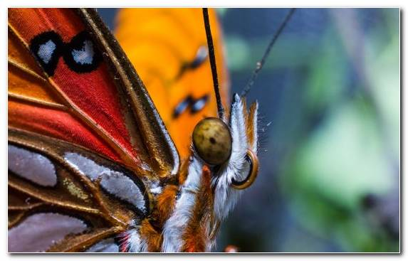 Image Close Up Moths And Butterflies Swallowtail Butterfly Insect Arthropod
