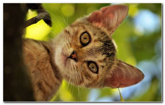Image close up whiskers cat pet tabby cat